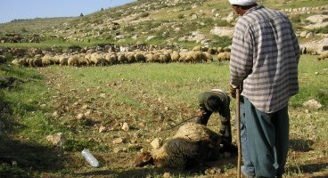 2005-04_settlers_poison_palestinian_land_and_sheep