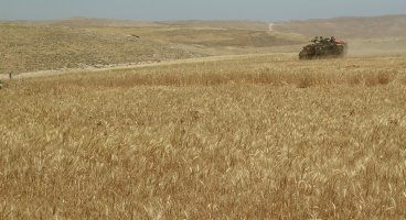 2005-05-09_idf_damage_fields_in_jinba