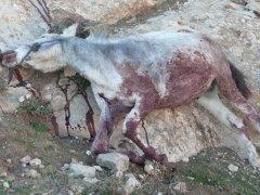 08-11-15 dead donkey 3