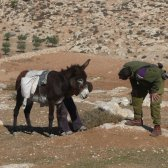 08-11-15 soldier looking at injured donkey
