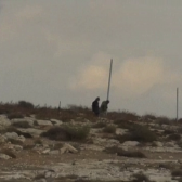 On November 23 Israeli settlers hammered in the ground three meters high iron pylons at the edge of the wood inside of which the illegal Israeli outpost is located.